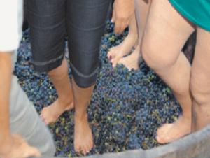 vinho2_geres